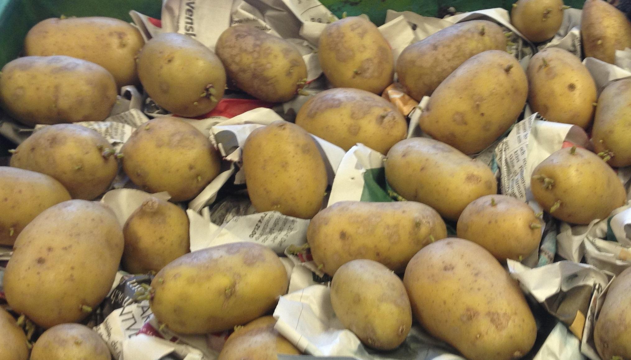 På bilden finns potatisar.